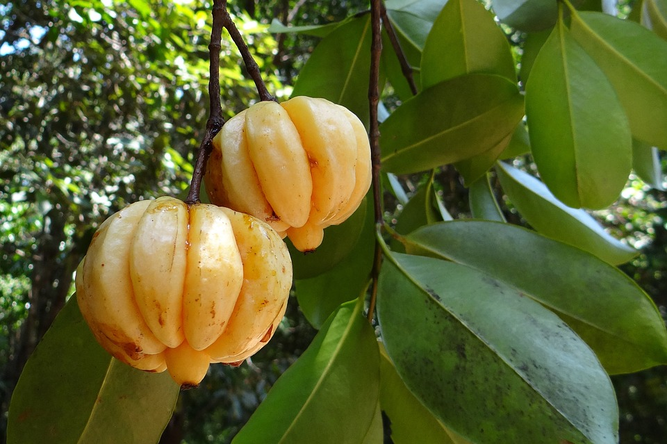 The Good About Garcinia